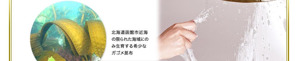 北海道函館市近海の限られた海域にのみ成育する希少なガゴメ昆布