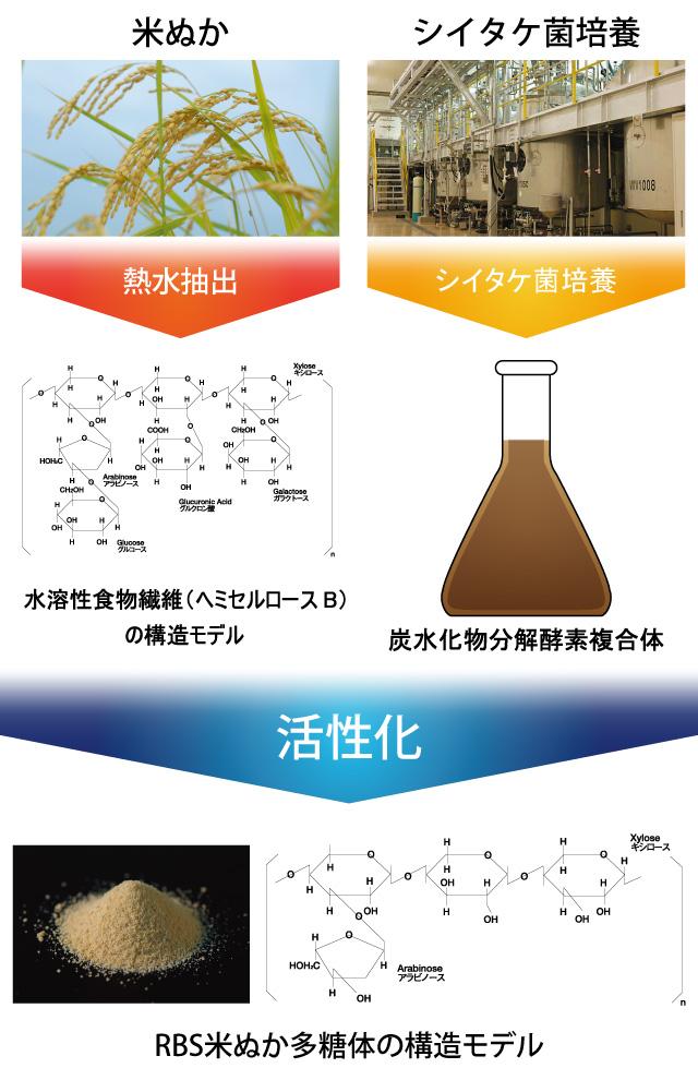 米ぬか多糖体構造モデル