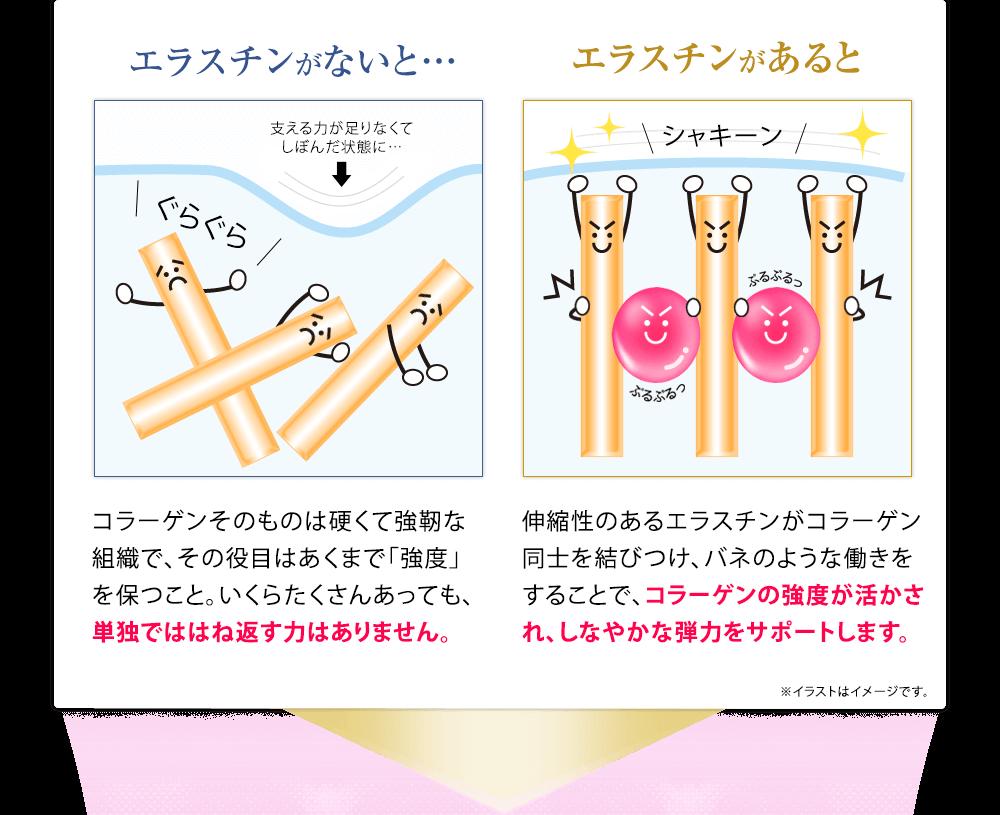 エラスチンがないと、コラーゲン単独でははね返す力はありません。一方エラスチンがあると、コラーゲンの強度が活かされ、しなやかな弾力をサポートします。[イメージ図]
