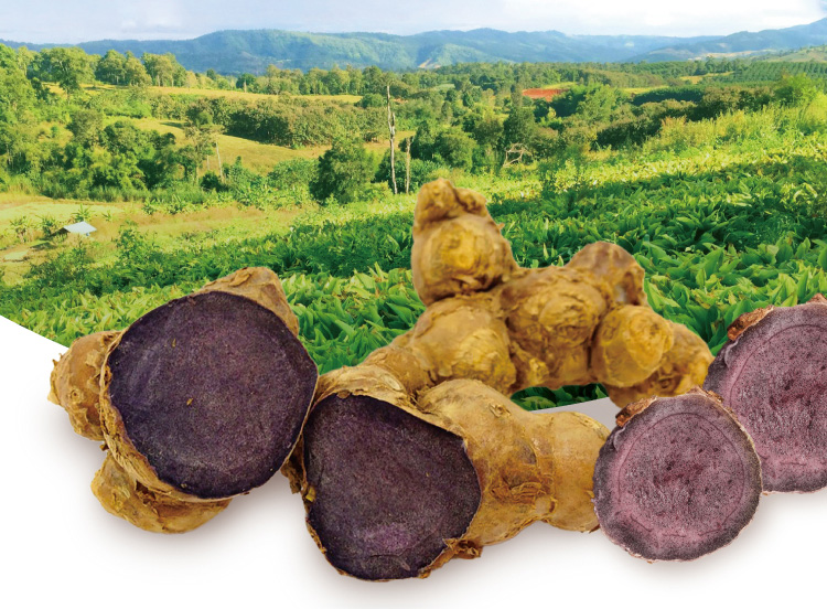 タイではクラチャイダムと呼ばれ古くから健康食として活用されています。