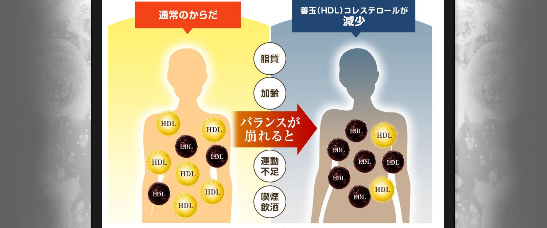 バランスが崩れると善玉(HDL)コレステロールが減少