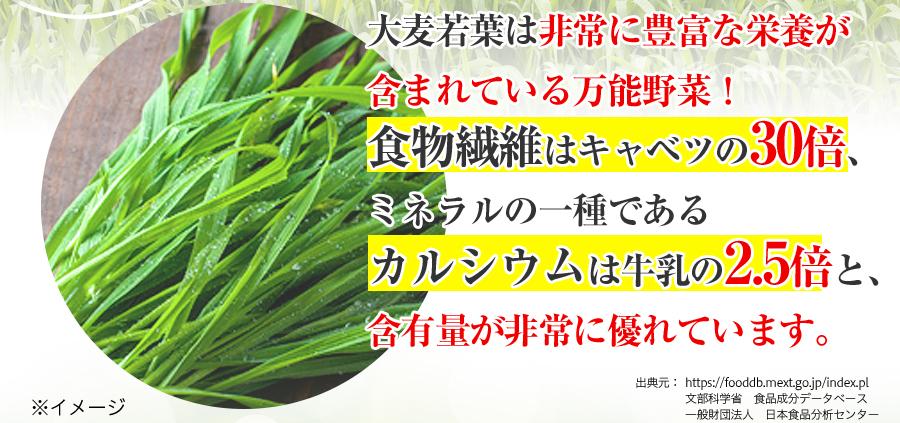 大麦若葉は非常に豊富な栄養が含まれている万能野菜!