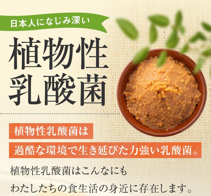 日本人になじみ深い植物性乳酸菌